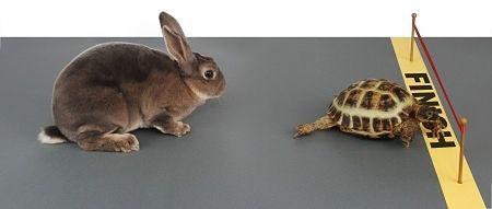 Turtle Beating Rabbit In Race